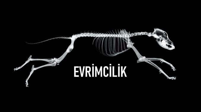 Evrimcilik