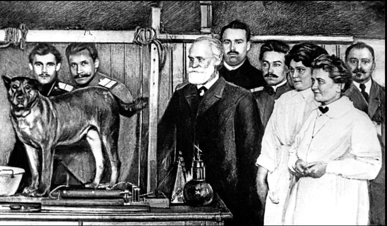 Ivan Pavlov'un deneylerinden bir görüntü.