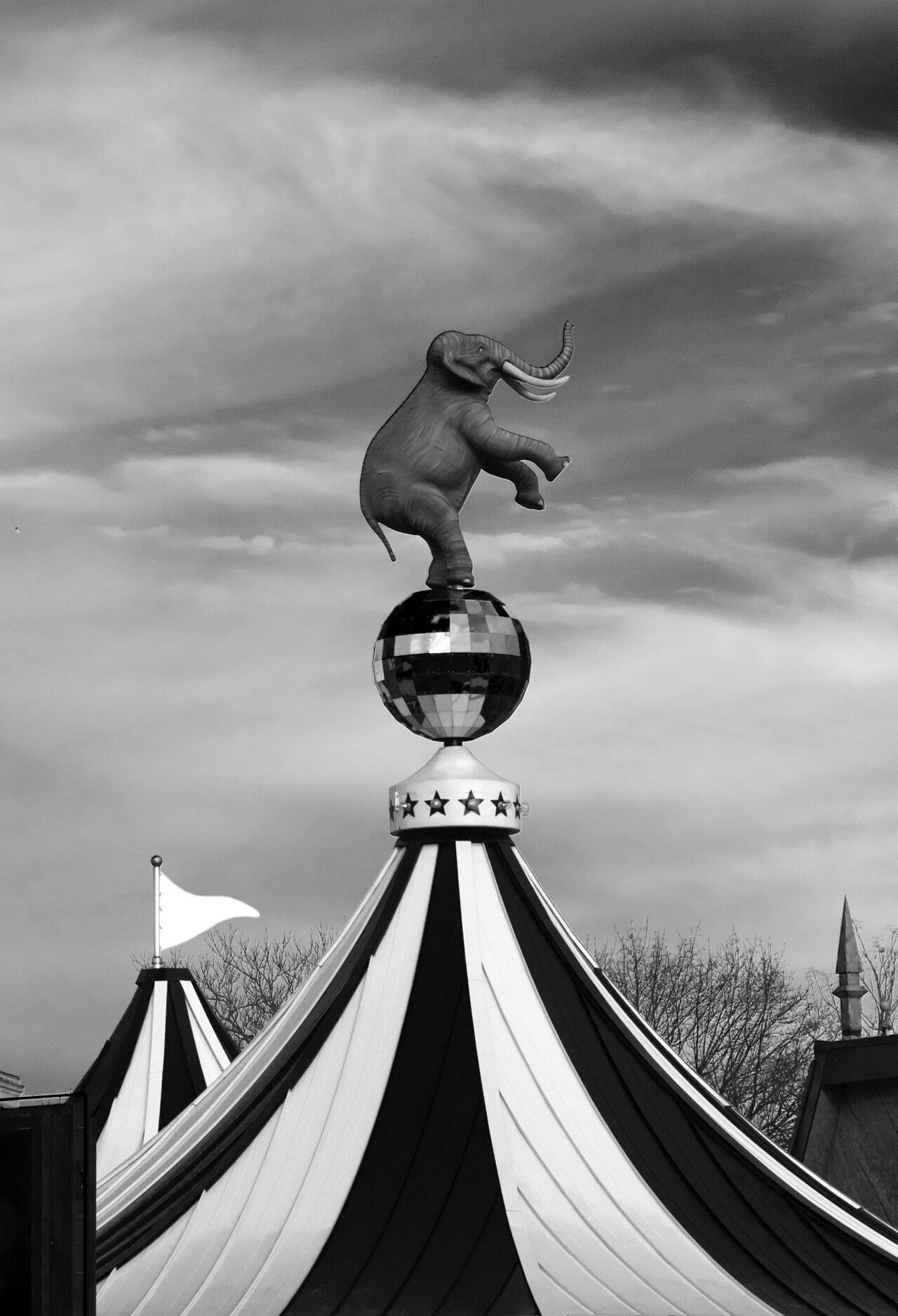 fil, sirk, sirk fili, sirk hayvanı